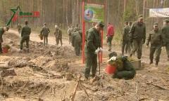 Субботник в Крупском военном лесхозе