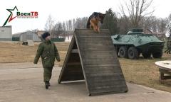 Военное обозрение 10.03.2020